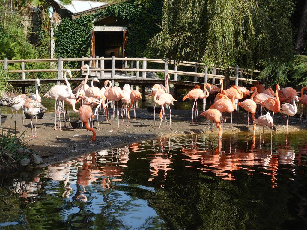 Hübsche Symbole für Empowerment: Flamingos am Atlantik.